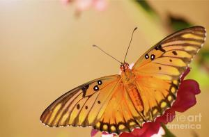 Beauty of the Butterfly